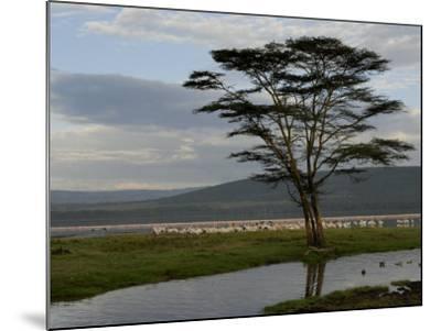Lake Nakuru National Park, Kenya, East Africa, Africa-Groenendijk Peter-Mounted Photographic Print