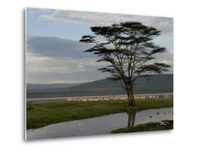 Lake Nakuru National Park, Kenya, East Africa, Africa-Groenendijk Peter-Metal Print
