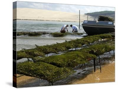 Oyster Fishermen Grading Oysters, Bay of Arcachon, Gironde, Aquitaine, France-Groenendijk Peter-Stretched Canvas Print