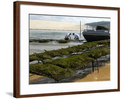 Oyster Fishermen Grading Oysters, Bay of Arcachon, Gironde, Aquitaine, France-Groenendijk Peter-Framed Photographic Print