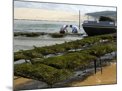 Oyster Fishermen Grading Oysters, Bay of Arcachon, Gironde, Aquitaine, France-Groenendijk Peter-Mounted Photographic Print