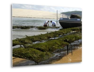 Oyster Fishermen Grading Oysters, Bay of Arcachon, Gironde, Aquitaine, France-Groenendijk Peter-Metal Print