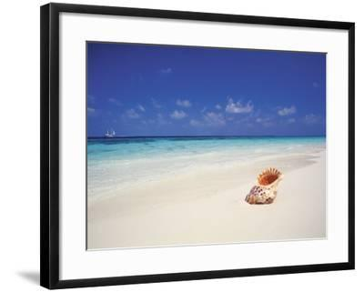 Shell on a Deserted Beach, Maldives, Indian Ocean-Papadopoulos Sakis-Framed Photographic Print