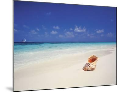 Shell on a Deserted Beach, Maldives, Indian Ocean-Papadopoulos Sakis-Mounted Photographic Print