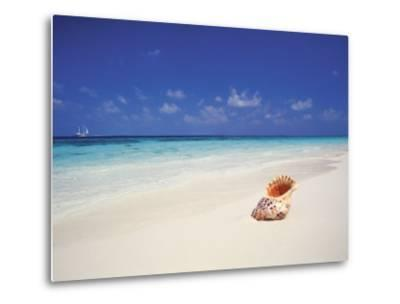 Shell on a Deserted Beach, Maldives, Indian Ocean-Papadopoulos Sakis-Metal Print