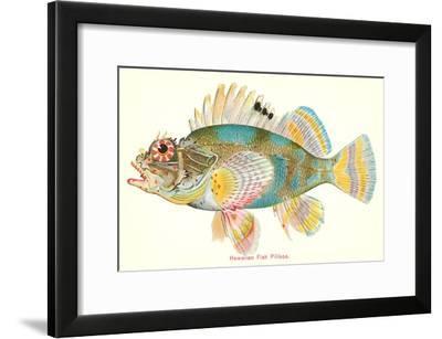 Hawaiian Fish, Pilikoa--Framed Art Print