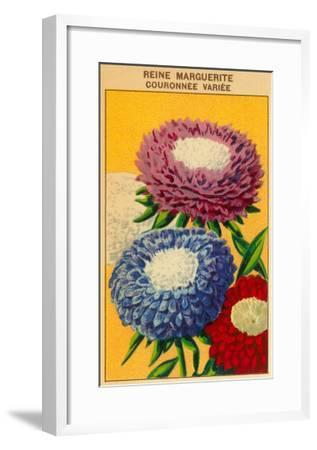 French Reine Marguerite Coronets Seed Packet--Framed Art Print