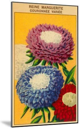 French Reine Marguerite Coronets Seed Packet--Mounted Art Print