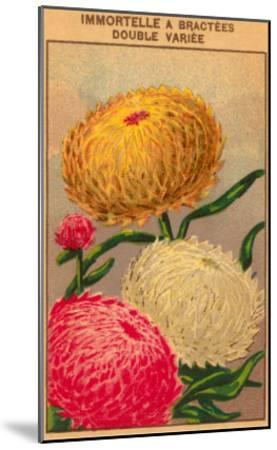 French Dahlia Seed Packet--Mounted Art Print