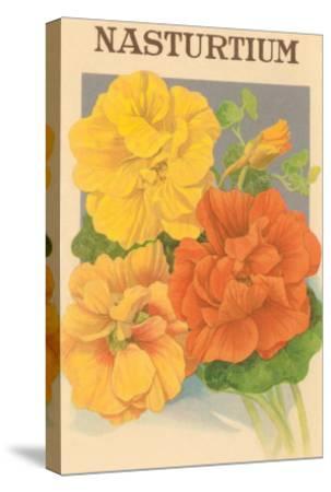 Nasturtium Seed Packet--Stretched Canvas Print