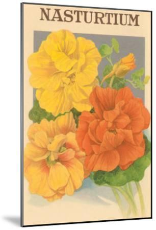 Nasturtium Seed Packet--Mounted Art Print