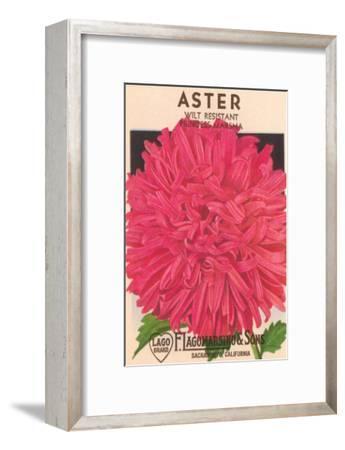 Aster Seed Packet--Framed Art Print