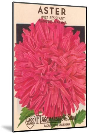 Aster Seed Packet--Mounted Art Print