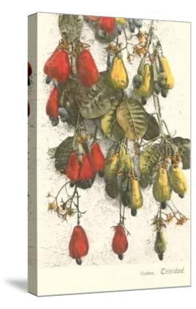 Cashew Plants, Trinidad--Stretched Canvas Print