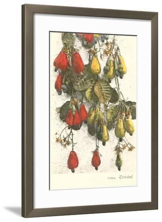Cashew Plants, Trinidad--Framed Art Print