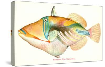 Hawaiian Fish, Nakunuku--Stretched Canvas Print