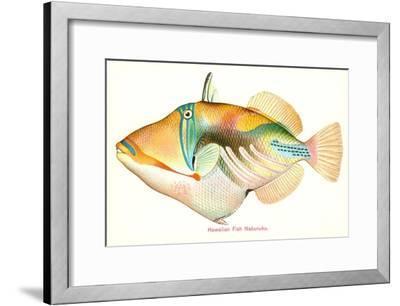 Hawaiian Fish, Nakunuku--Framed Art Print