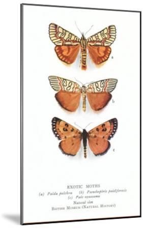 Exotic Moths--Mounted Art Print