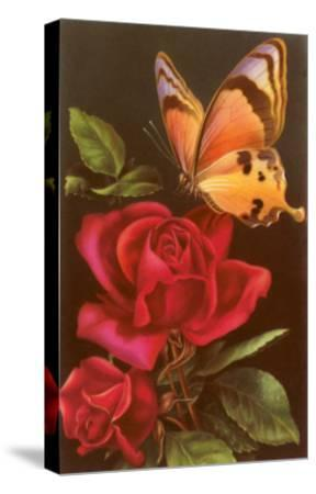 Red Roses with Yellow Swallowtail Butterfly--Stretched Canvas Print