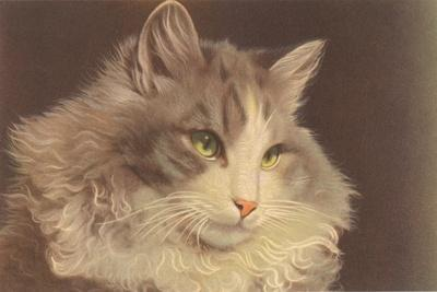 Fluffy Cat--Stretched Canvas Print
