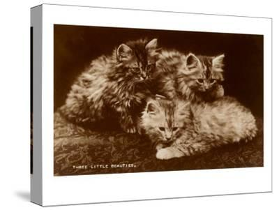 Sepia Photograph of Kittens--Stretched Canvas Print