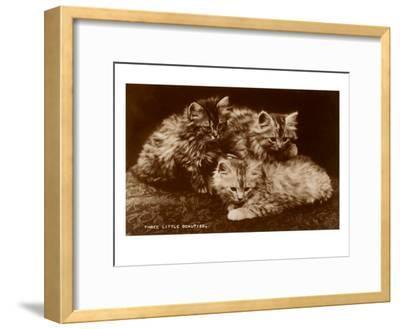 Sepia Photograph of Kittens--Framed Art Print