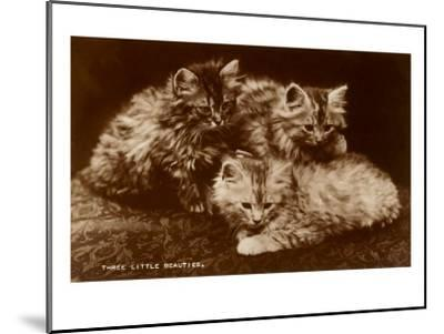 Sepia Photograph of Kittens--Mounted Art Print