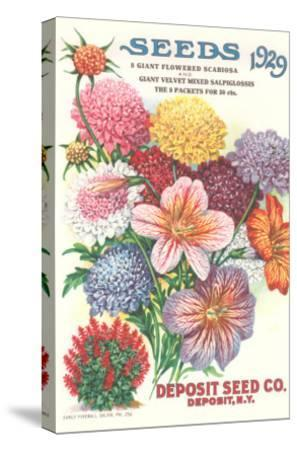 Seed Catalogue with Flower Assortment--Stretched Canvas Print