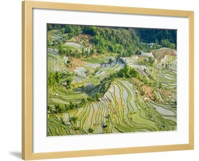 Flooded Laohu Zui Rice Terraces, Mengpin Village, Yuanyang County, Yunnan, China-Charles Crust-Framed Photographic Print