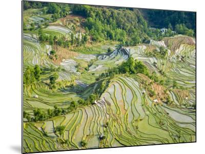Flooded Laohu Zui Rice Terraces, Mengpin Village, Yuanyang County, Yunnan, China-Charles Crust-Mounted Photographic Print