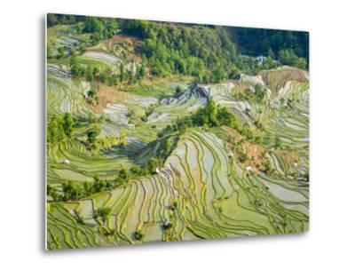 Flooded Laohu Zui Rice Terraces, Mengpin Village, Yuanyang County, Yunnan, China-Charles Crust-Metal Print