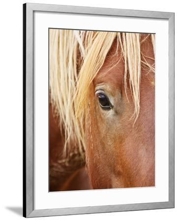 Feral Horse colt running in the high sagebrush, Cody, Wyoming, USA-Larry Ditto-Framed Photographic Print