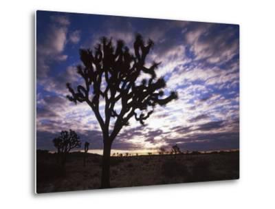Joshua Trees, Joshua Tree National Park, California, USA-Charles Gurche-Metal Print