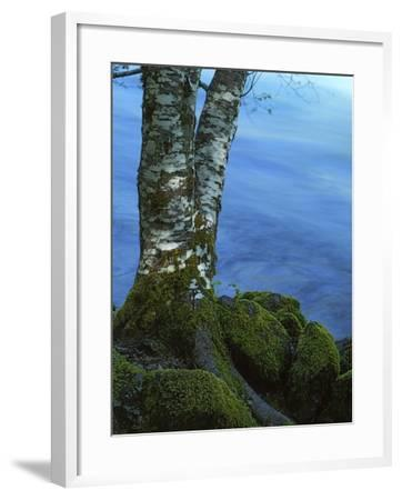 Alder Trunk along the McKenzie River, Willamette National Forest, Oregon, USA-Charles Gurche-Framed Photographic Print