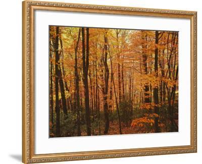 Autumn forest, Blue Ridge Parkway, Virginia, USA-Charles Gurche-Framed Photographic Print