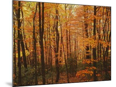 Autumn forest, Blue Ridge Parkway, Virginia, USA-Charles Gurche-Mounted Photographic Print
