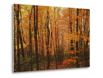 Autumn forest, Blue Ridge Parkway, Virginia, USA-Charles Gurche-Metal Print