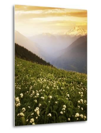 Meadow with helebore and sitka valerian on Green Mountain, Glacier Peak Wilderness, Washington, USA-Charles Gurche-Metal Print
