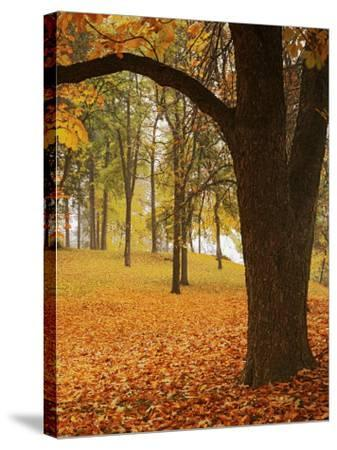 Autumn, Manito Park, Spokane, Washington, USA-Charles Gurche-Stretched Canvas Print