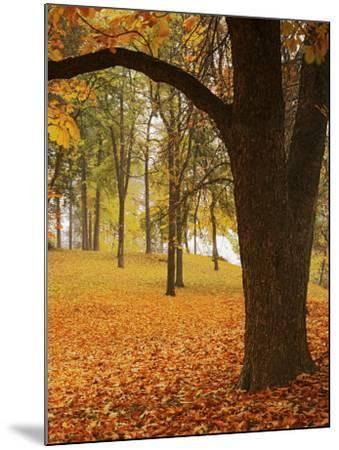 Autumn, Manito Park, Spokane, Washington, USA-Charles Gurche-Mounted Photographic Print