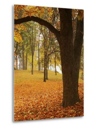 Autumn, Manito Park, Spokane, Washington, USA-Charles Gurche-Metal Print