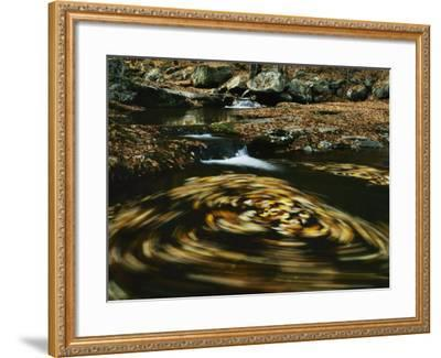 Leaves in whirlpool of Tye River near Blue Ridge Parkway, Appalachian Mountains, Virginia, USA-Charles Gurche-Framed Photographic Print