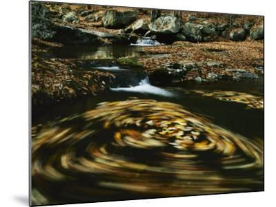 Leaves in whirlpool of Tye River near Blue Ridge Parkway, Appalachian Mountains, Virginia, USA-Charles Gurche-Mounted Photographic Print