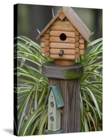 Backyard Birdhouse-Chuck Haney-Stretched Canvas Print