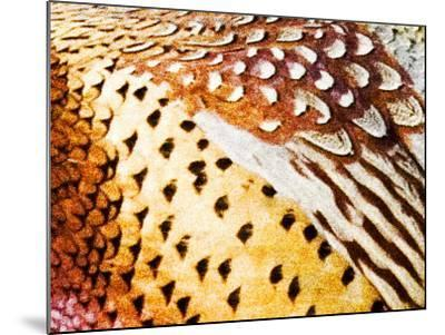 Close Up Pheasant Feathers, Moiese, Montana, USA-Chuck Haney-Mounted Photographic Print