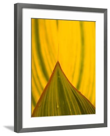 Detail of Hosta Leaf, Green Spring Gardens Park, Alexandria, Virginia, USA-Corey Hilz-Framed Photographic Print