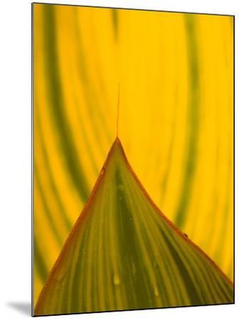 Detail of Hosta Leaf, Green Spring Gardens Park, Alexandria, Virginia, USA-Corey Hilz-Mounted Photographic Print