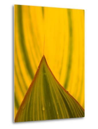 Detail of Hosta Leaf, Green Spring Gardens Park, Alexandria, Virginia, USA-Corey Hilz-Metal Print