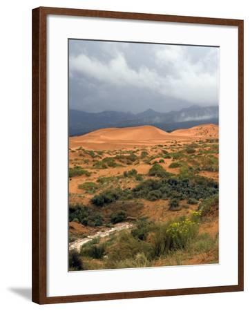 Storm at Coral Pink Sand Dunes State Park, Utah, USA-Diane Johnson-Framed Photographic Print