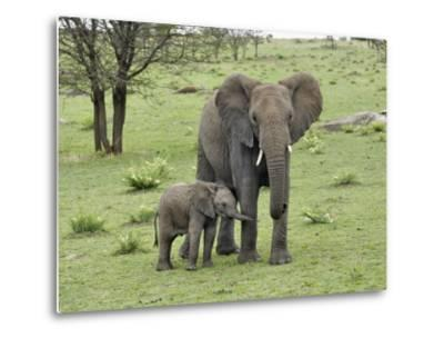 Female African Elephant with baby, Serengeti National Park, Tanzania-Adam Jones-Metal Print